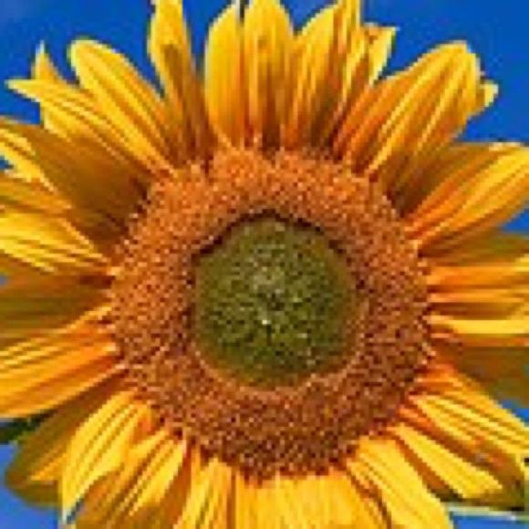 sunflowertco